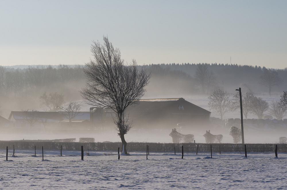 http://www.eifelmomente.de/albums/Nordeifel/Winter/2015-16_Winter/2016_02_16_-_074_Sief_DNG_bearb.jpg