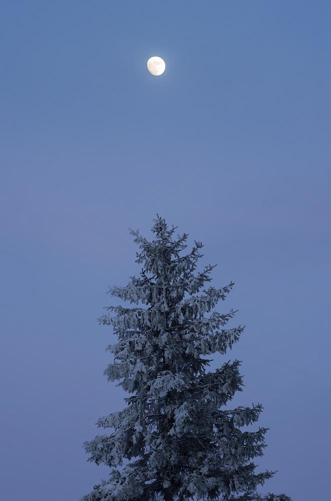 http://www.eifelmomente.de/albums/Nordeifel/Winter/2016_01_17-21_Winter_Venn/2016_01_21_-_050_Poleurvenn_DNG_DRI_bearb.jpg