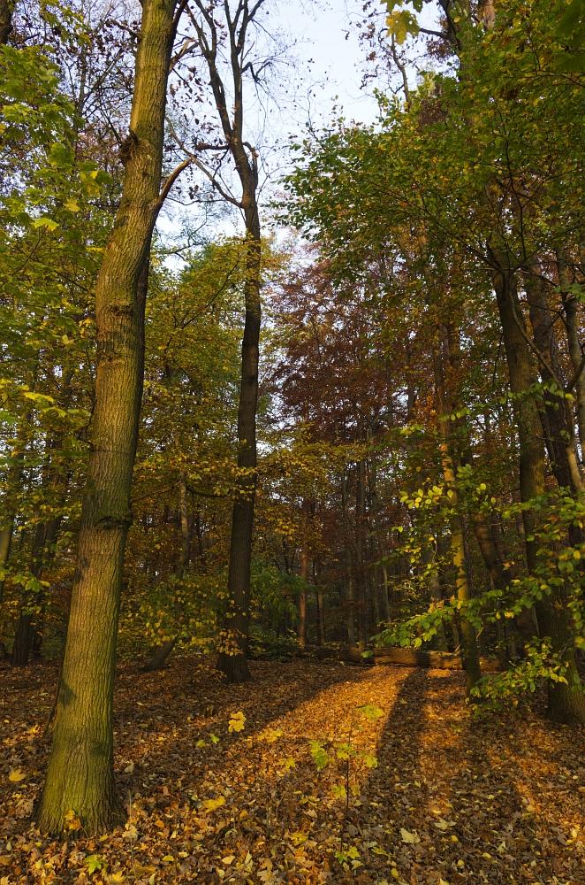 http://www.eifelmomente.de/albums/Urlaub/2011_11_05-09_Berlin/2011_11_06_-_031_Sacrower_See_DNG_bearb.jpg