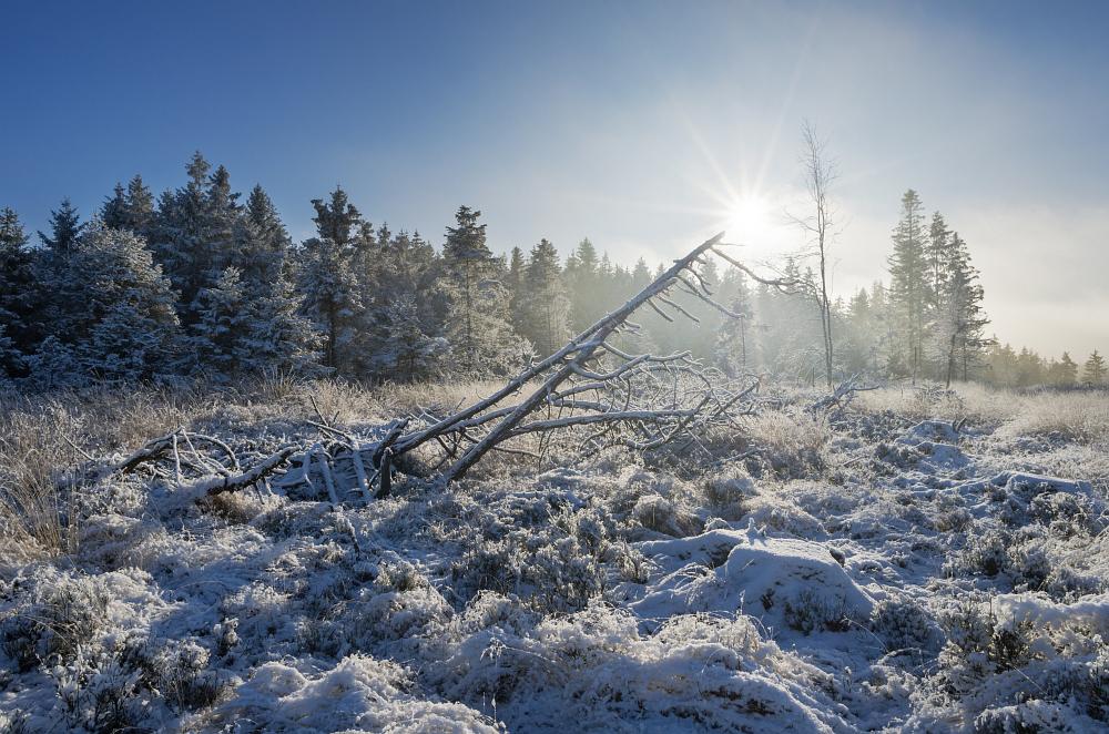 https://www.eifelmomente.de/albums/Nordeifel/Winter/2020-21_Winter/2020_12_09_-_110_Hoscheit_DNG_DRI_bearb.jpg