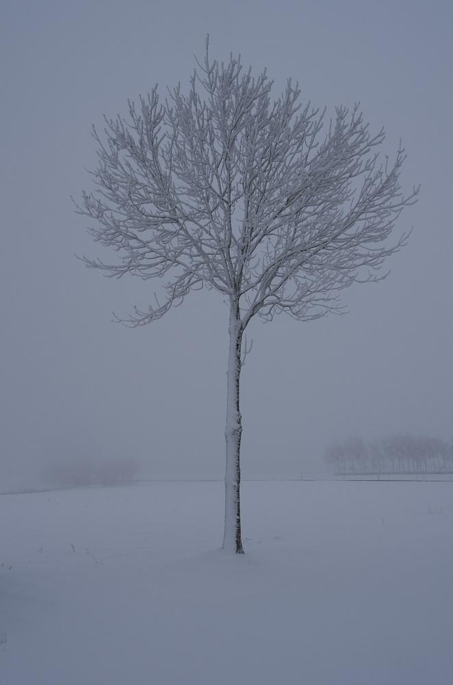 https://www.eifelmomente.de/albums/Nordeifel/Winter/2020-21_Winter/2021_01_06_-_04_Bei_Strauch_DNG_bearb.jpg
