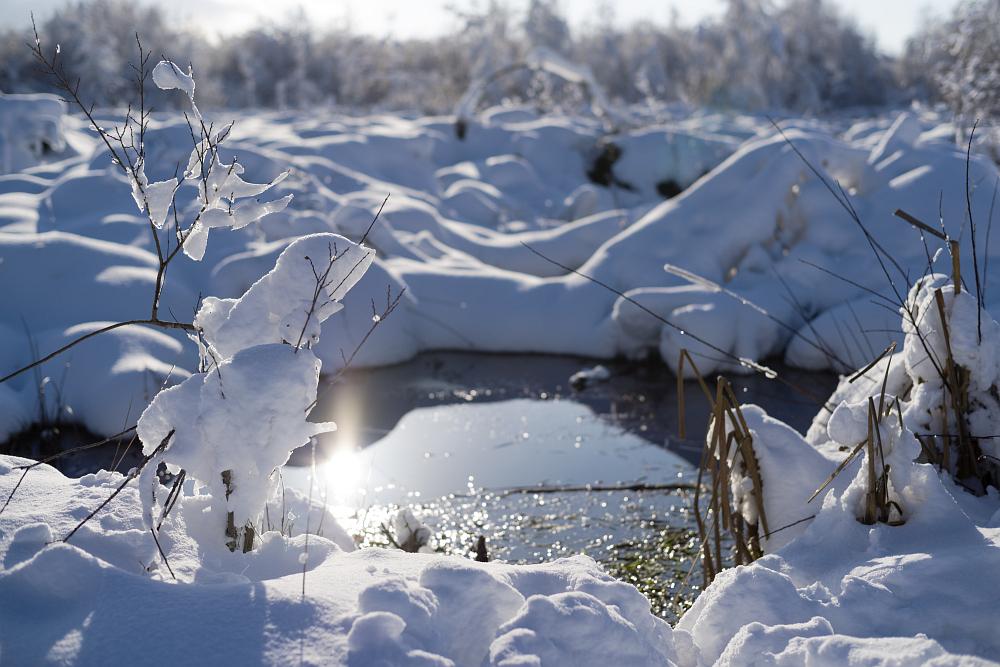 https://www.eifelmomente.de/albums/Nordeifel/Winter/2020-21_Winter/2021_01_10_-_022_Simmerath_Kranzbruch_DNG_bearb.jpg