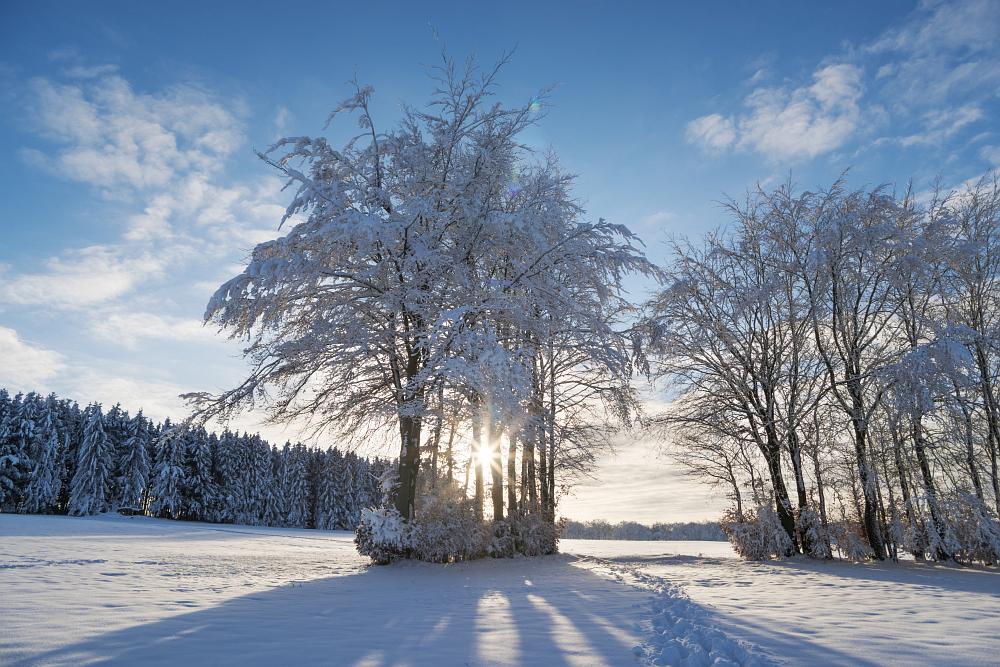 https://www.eifelmomente.de/albums/Nordeifel/Winter/2020-21_Winter/2021_01_10_-_113_Simmerath_Kranzbruch_DNG_DRI_bearb.jpg