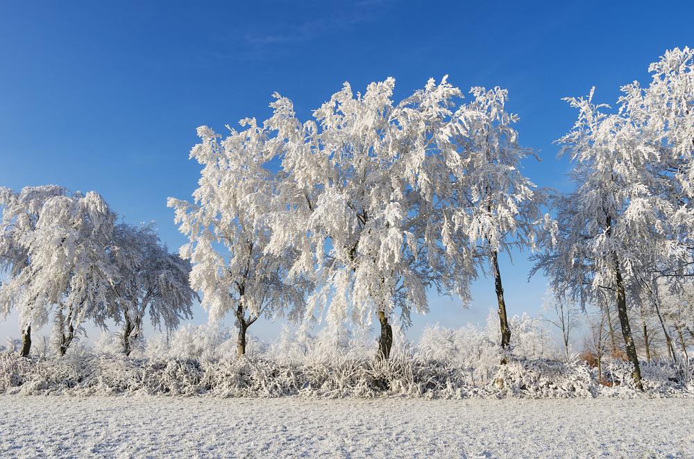 https://www.eifelmomente.de/albums/Nordeifel/Winter/2020-21_Winter/2021_02_10_-_25_Bei_Kesternich_DNG_bearb.jpg