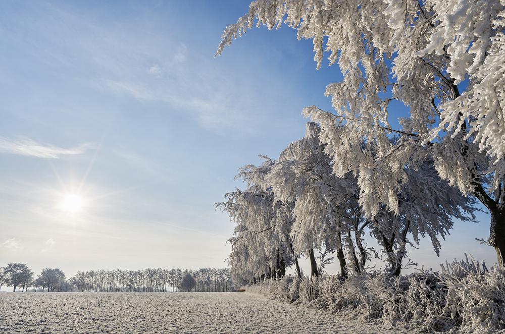 https://www.eifelmomente.de/albums/Nordeifel/Winter/2020-21_Winter/2021_02_10_-_29_Bei_Kesternich_DNG_DRI_bearb.jpg