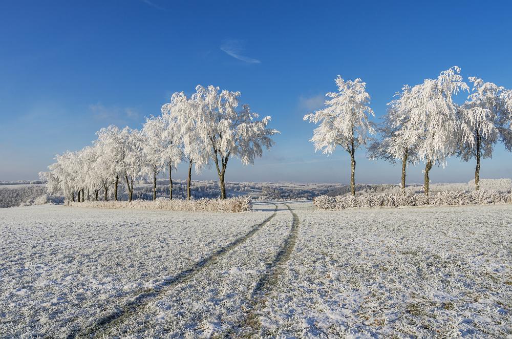 https://www.eifelmomente.de/albums/Nordeifel/Winter/2020-21_Winter/2021_02_10_-_41_Bei_Kesternich_DNG_bearb.jpg