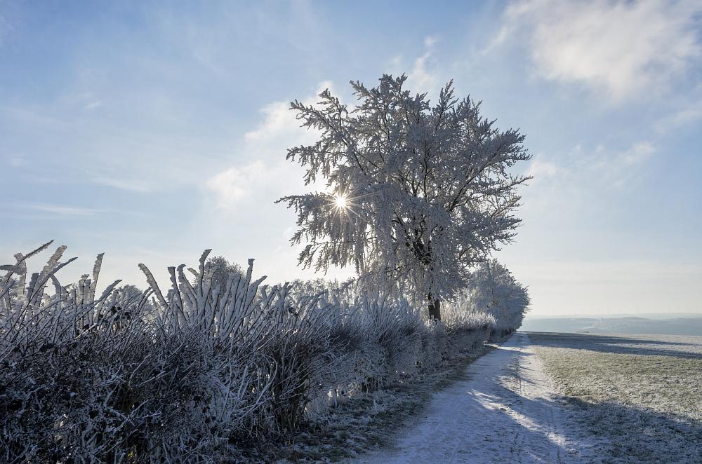 https://www.eifelmomente.de/albums/Nordeifel/Winter/2020-21_Winter/2021_02_10_-_57_Bei_Kesternich_DNG_DRI_bearb.jpg