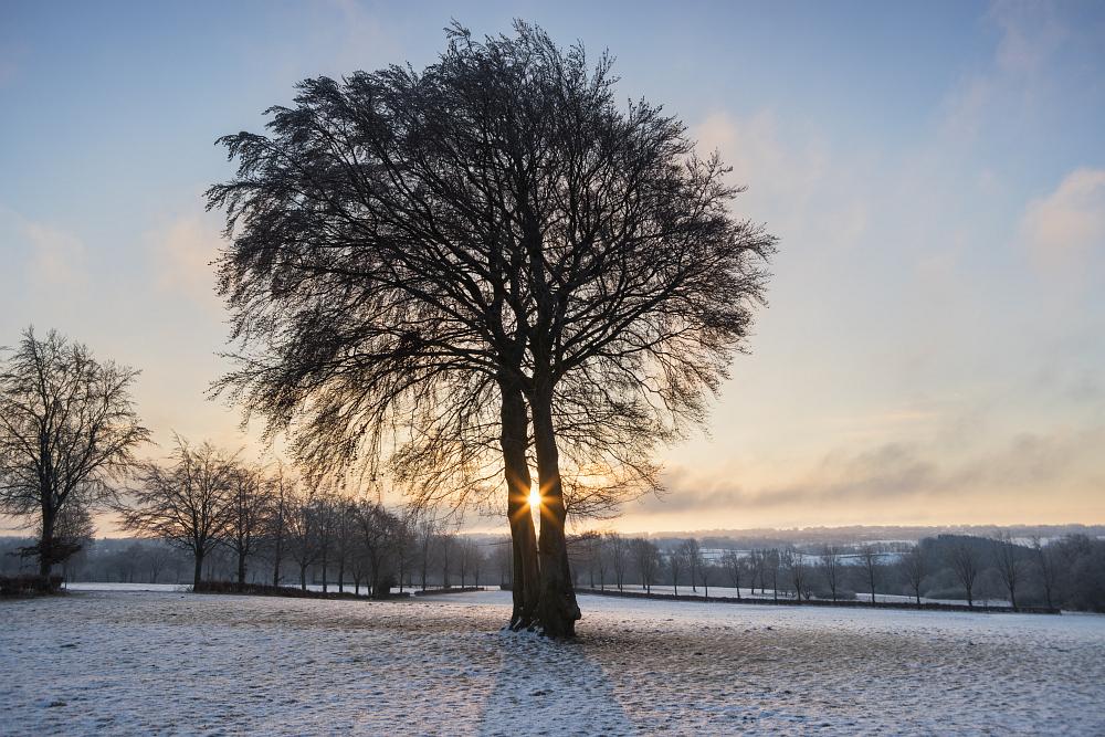 https://www.eifelmomente.de/albums/Nordeifel/Winter/2020-21_Winter/2021_02_12_-_101_Bei_Lammersdorf_DNG_DRI_bearb.jpg