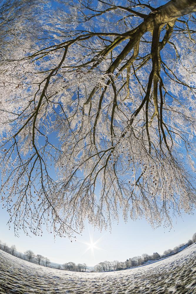 https://www.eifelmomente.de/albums/Nordeifel/Winter/2020-21_Winter/2021_02_12_-_235_Bei_Lammersdorf_DNG_DRI_bearb.jpg