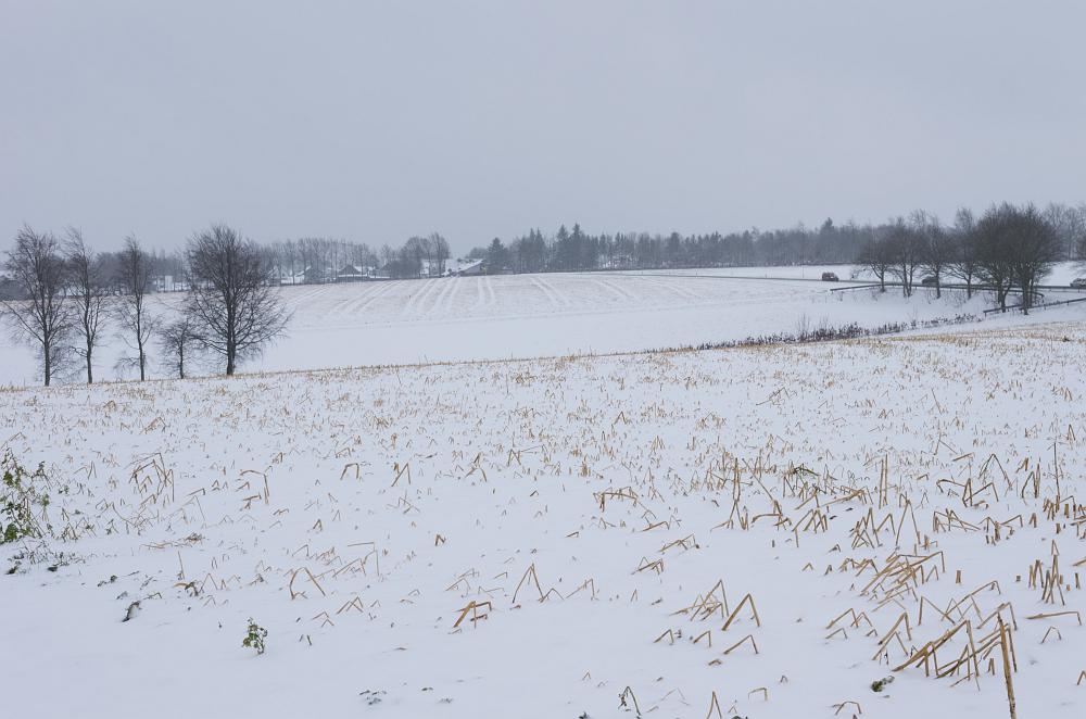 https://www.eifelmomente.de/albums/Nordeifel/Winter/2020_02_27-28_Wintergastspiel/2020_02_27_-_06_Bei_Strauch_DNG_bearb.jpg