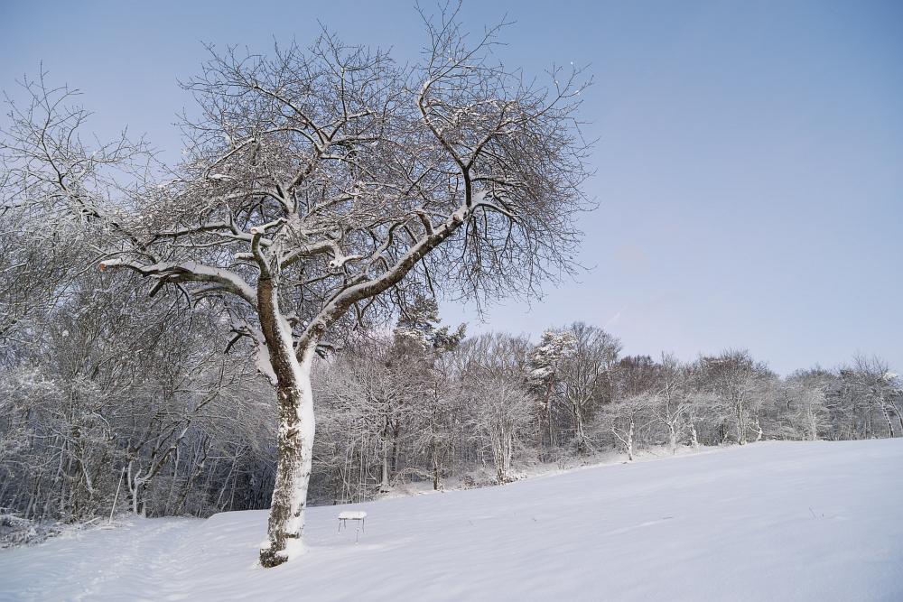 https://www.eifelmomente.de/albums/Nordeifel/Winter/2020_02_27-28_Wintergastspiel/2020_02_28_-_005_Bei_Steckenborn_DNG_bearb.jpg