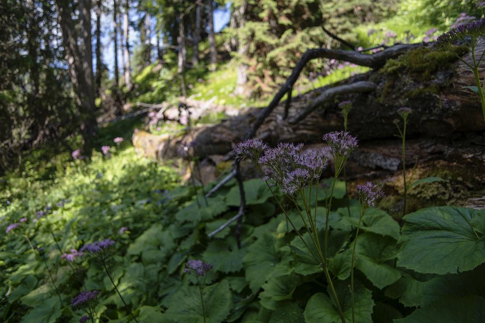 https://www.eifelmomente.de/albums/Urlaub/2018_07_17-26_Alpen/2018_07_18_-_108_Aufstieg_Sarlridl_DNG_bearb.jpg