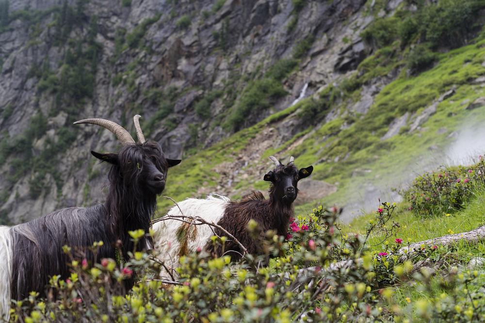 https://www.eifelmomente.de/albums/Urlaub/2018_07_17-26_Alpen/2018_07_22_-_169_Sulzenaualm_DNG_bearb.jpg